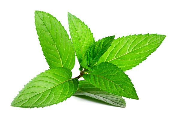 peppermint oil ingredient